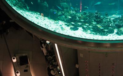 Aquarium an der Bar