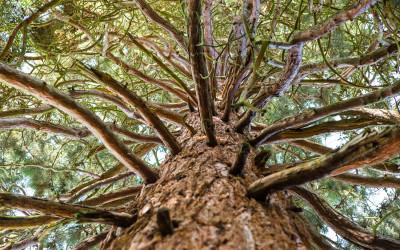 Baum #1