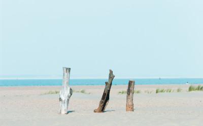 Holzklötze am Strand